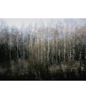 Vue du train by Dimitri Tolstoï