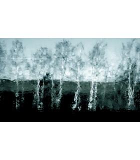 Arbres flous par Dimitri Tolstoï