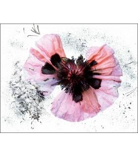 Broken flower by Dimitri Tolstoï