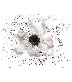 Fleur blanche by Dimitri Tolstoï
