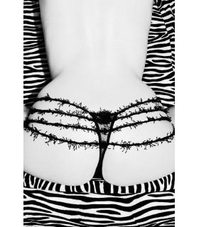 Liza Zebra by Claude Guillaumin