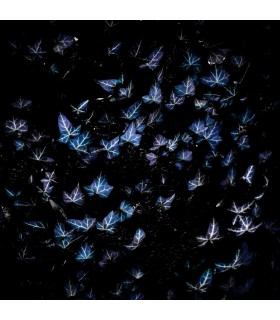 Butterflies by Giles Daoust