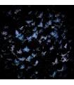 Papillons par Giles Daoust