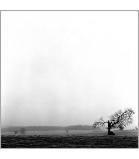 Broken tree by Kasra