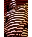 Rouge Gorge par Basile Minatchy